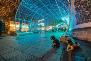Norwich city tunnel of light with dogs sat on the ground